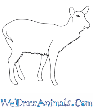 How to Draw a Waterbuck in 6 Easy Steps