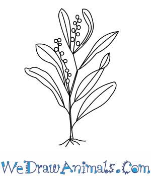 How to Draw a Wattle Tree in 5 Easy Steps