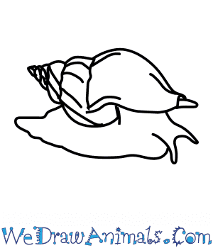 How to Draw a Whelk in 5 Easy Steps
