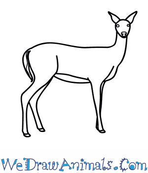 how to draw a whitetail deer