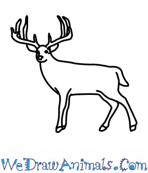 How to Draw a Whitetail in 6 Easy Steps