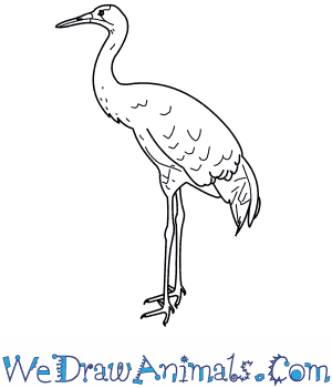 How to Draw a Whooping Crane in 8 Easy Steps