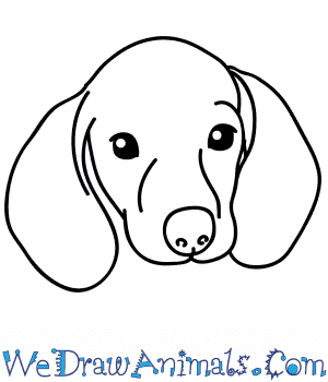How to Draw a Wiener Dog Face in 5 Easy Steps
