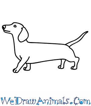 How To Draw A Wiener Dog on Coloring Pictures Of Animals At The Zoo