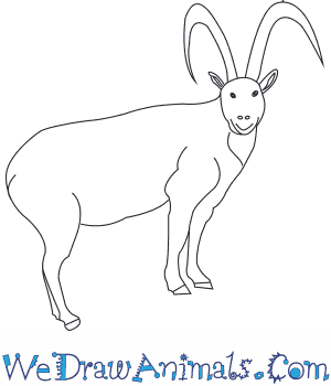How to Draw a Wild Goat in 6 Easy Steps