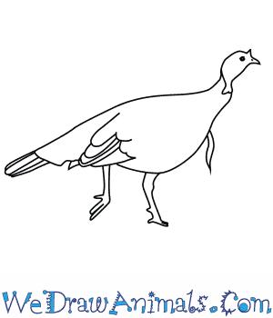 How to Draw a Wild Turkey in 7 Easy Steps
