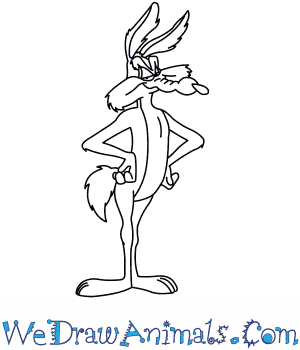 How to Draw  Wile E Coyote From Looney Tunes in 8 Easy Steps
