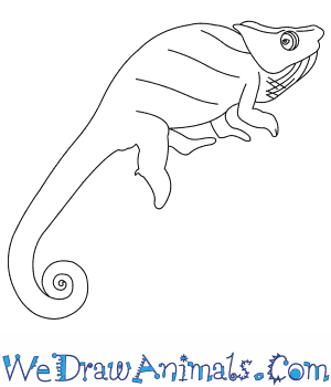 How to Draw a Wills Chameleon in 7 Easy Steps