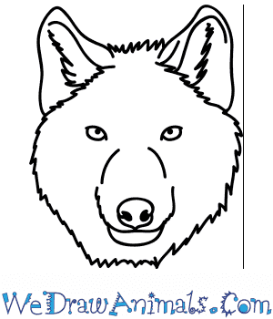How to Draw a Wolf Face in 5 Easy Steps