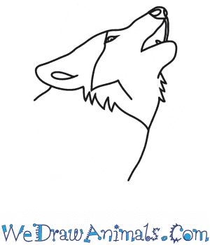 How to Draw a Wolf Howling Head in 6 Easy Steps