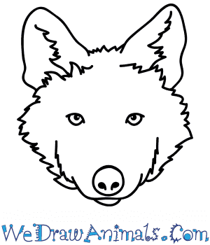 How to Draw a Wolf Pup Face in 5 Easy Steps