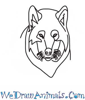 How to Draw a Wolf Pup Head in 7 Easy Steps