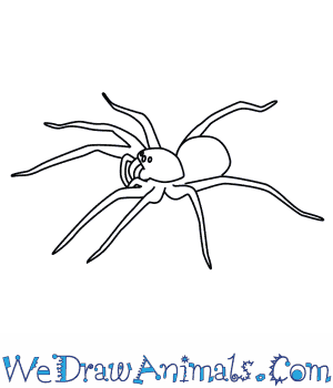 How to Draw a Wolf Spider in 7 Easy Steps