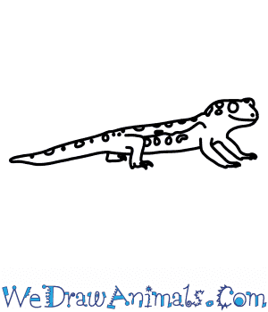 How to Draw a Wonder Gecko in 7 Easy Steps