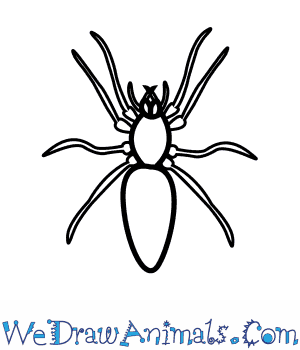 How to Draw a Woodlouse Spider in 5 Easy Steps