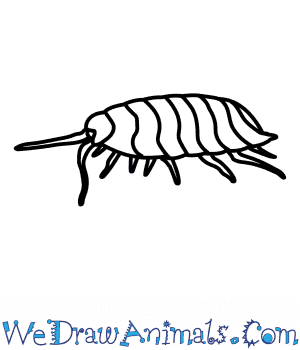 How to Draw a Woodlouse in 5 Easy Steps