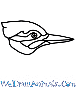 How to Draw a Woodpecker Face in 5 Easy Steps
