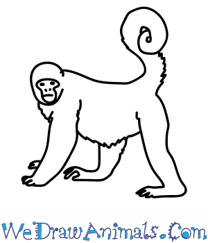 How to Draw a Woolly Monkey in 7 Easy Steps