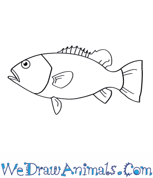 How to Draw a Wreckfish in 6 Easy Steps