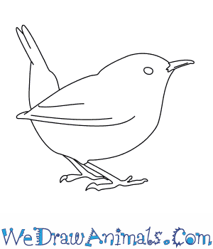 How to Draw a Wren in 7 Easy Steps