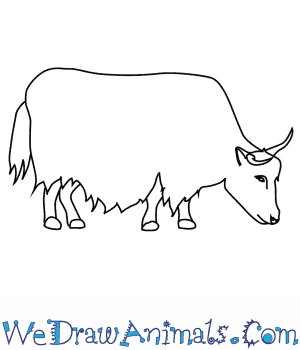 How to Draw a Yak in 8 Easy Steps