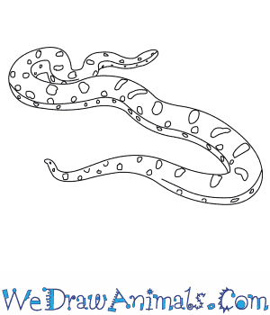 How to Draw a Yellow Anaconda in 5 Easy Steps