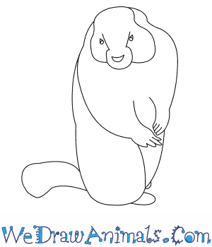 How to Draw a Yellow Bellied Marmot in 6 Easy Steps