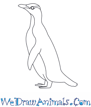 How to Draw a Yellow Eyed Penguin in 6 Easy Steps