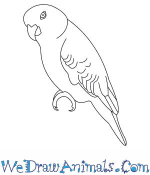 How to Draw a Yellow Naped Amazon in 7 Easy Steps