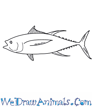 How to Draw a Yellowfin Tuna in 7 Easy Steps