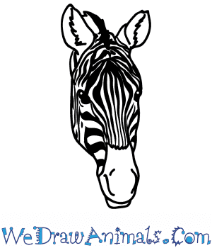 How to Draw a Zebra Face in 5 Easy Steps