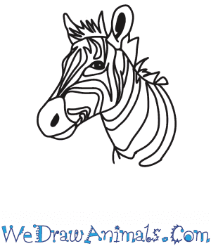 How to Draw a Zebra Head in 6 Easy Steps