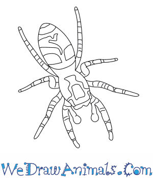 How to Draw a Zebra Spider in 6 Easy Steps