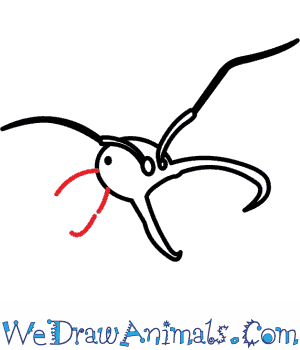 how to draw an army ant