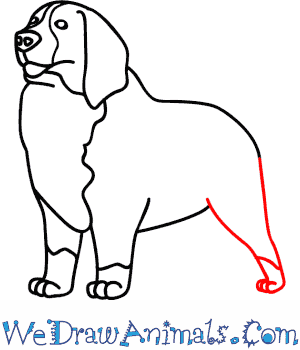 How To Draw A Bernese Mountain Dog