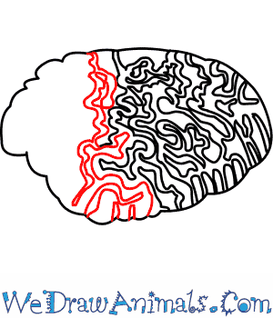 How To Draw A Brain Coral