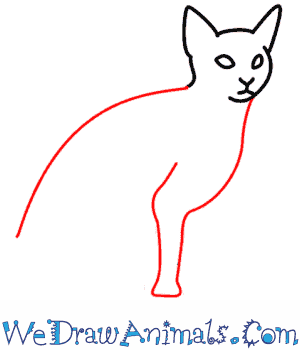 How to Draw a Cat - Quick Step-by-Step Tutorial - Step 4