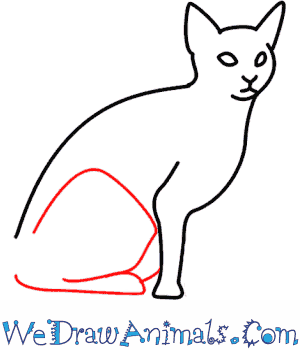 How to Draw a Cat - Quick Step-by-Step Tutorial - Step 5