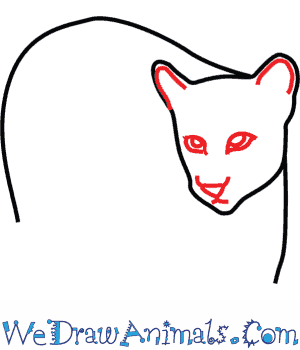 how to draw a cougar