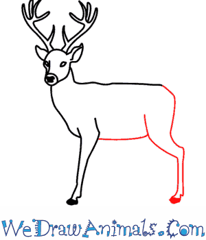deer 09png