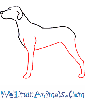 How to Draw a Dog - Quick Step-by-Step Tutorial - Step 4