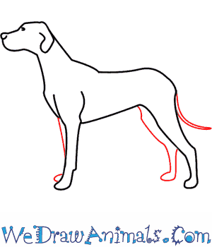 How to Draw a Dog - Quick Step-by-Step Tutorial - Step 5