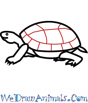 how to draw an eastern box turtle