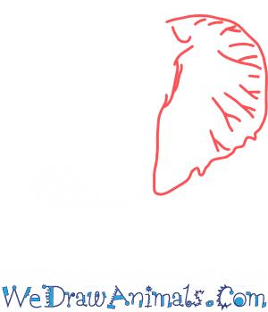 How To Draw An Elephant Head