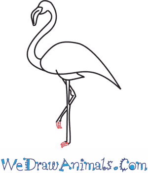 How to Draw a Flamingo - Quick Step-by-Step Tutorial - Step 7