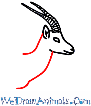 How to Draw a Gazelle - Quick Step-by-Step Tutorial - Step 5