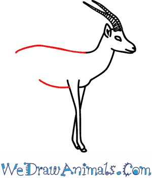 How to Draw a Gazelle - Quick Step-by-Step Tutorial - Step 8