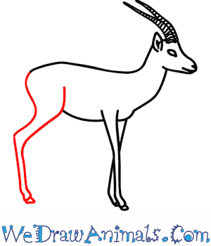 How to Draw a Gazelle - Quick Step-by-Step Tutorial - Step 9
