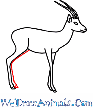 How to Draw a Gazelle - Quick Step-by-Step Tutorial - Step 10