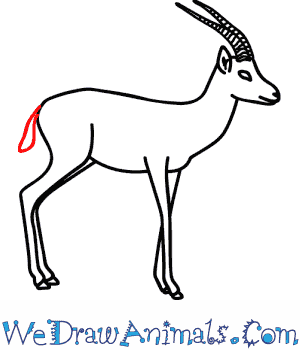 How to Draw a Gazelle - Quick Step-by-Step Tutorial - Step 11